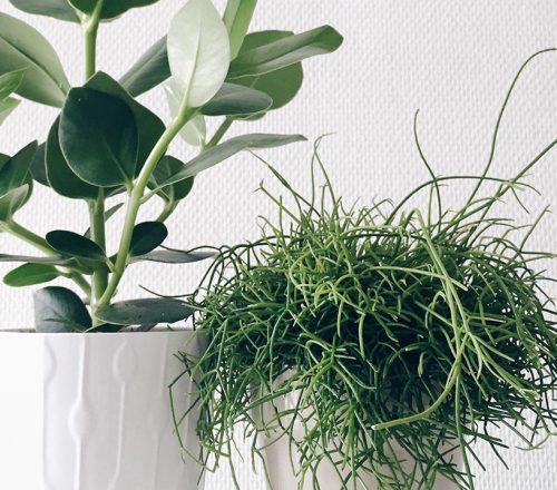 1_blog_mode_beaute_deco_plantes_ikea